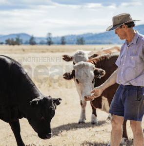 Q FEVER RISK AS DROUGHT GRIPS STATE