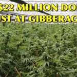 $22 MILLION MARIJUANA BUST IN RIVERTOWN DISTRICT